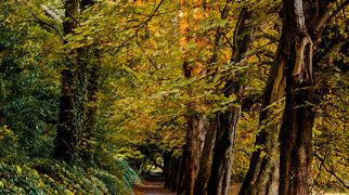Saint Anne's Park>