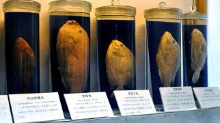 上海自然博物館>