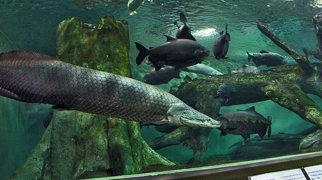 Shanghai Ocean Aquarium>