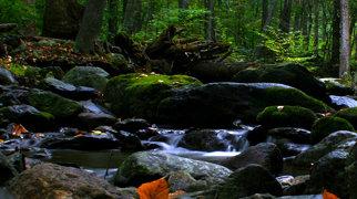 Shenandoah National Park>