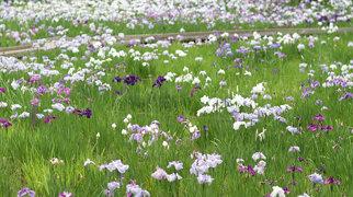 Showa Memorial Park>