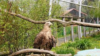 Silesian Zoological Garden>