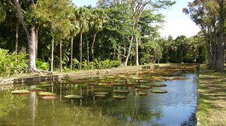 Jardin botanique Sir Seewoosagur Ramgoolam>