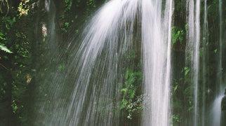 South China Botanical Garden>