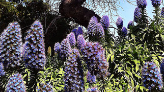 St Vincent Gardens>