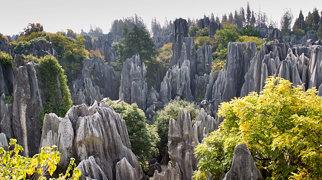 Stone Forest>