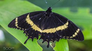Stratford Butterfly Farm>
