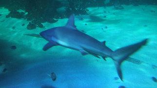 Sydney Aquarium>