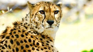 Tama Zoological Park>