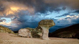 The Stone Mushrooms>