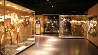 University of Copenhagen Zoological Museum>