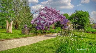Utrecht University Botanic Gardens>