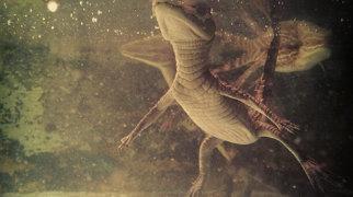 Valencia's Aquarium>