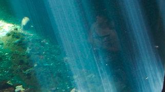 Vancouver Aquarium>