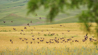 Nationaal park Vasjlovani>