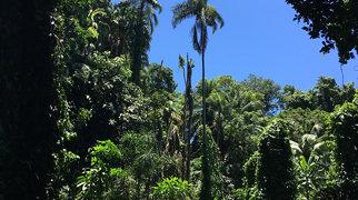Victoria Botanical Gardens>