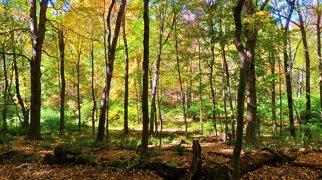 Wadsworth Falls State Park>