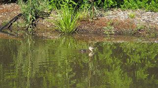 Wilson Botanic Park>