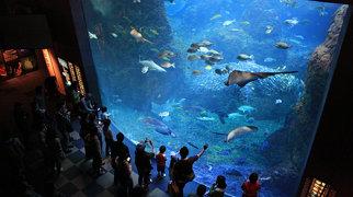 Enoshima Aquarium>