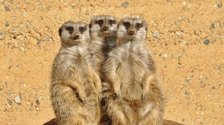 Zoológico de Basileia>