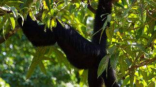 Zoológico de Paramaribo>