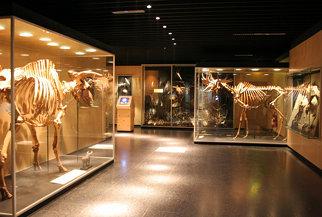 Zoo Museum