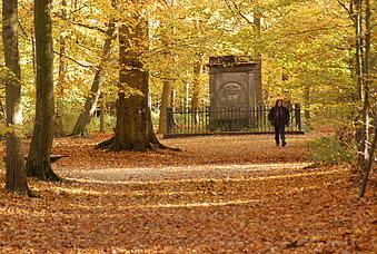 Autumn in Haarlemmerhout