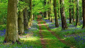 Highwood gardens in Charborough Park, Dorset