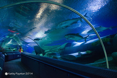 Underwater World Tunnel