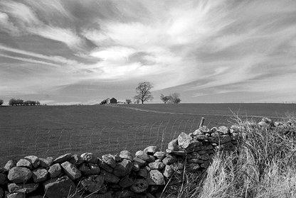 Long Meg Farm