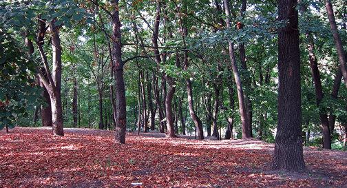Fomin Botanical Gardens - Kiev University