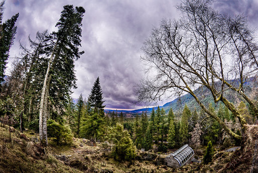 From the top, Benmore Botanic Garden