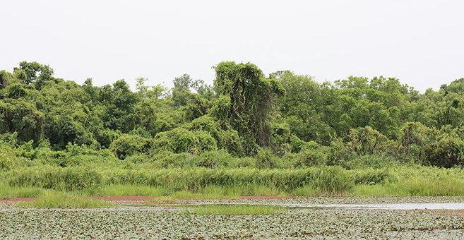 Badema - Mare aux Hippopotames