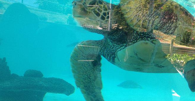 Nouméa - Aquarium des lagons