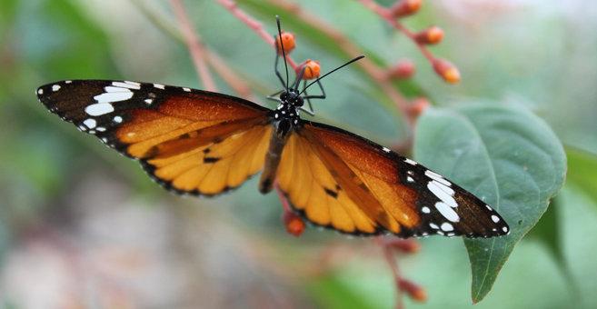Grevenmacher - Butterfly Garden, Grevenmacher