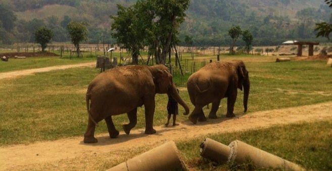 Thailand - Elephant Nature Park