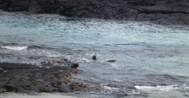 Santo Tomás - Îles Galápagos
