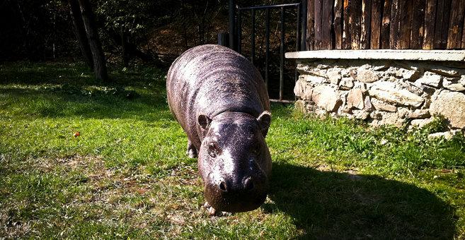 Košice - Košice Zoo