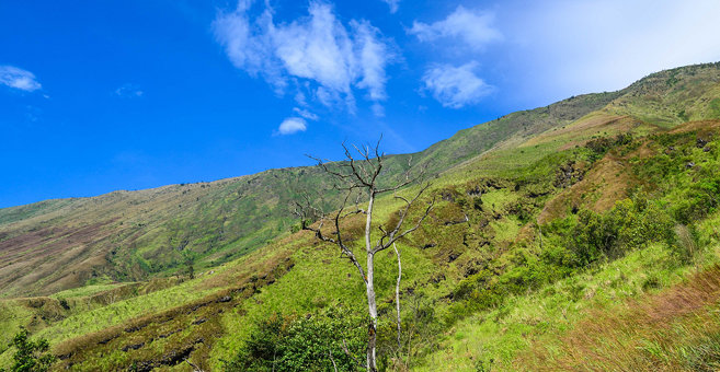 Ndu - Mount Cameroon