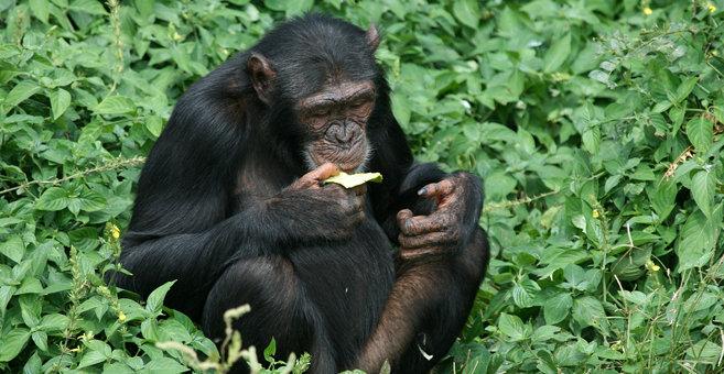 Bugombo Mission - Ngamba Island Chimpanzee Sanctuary