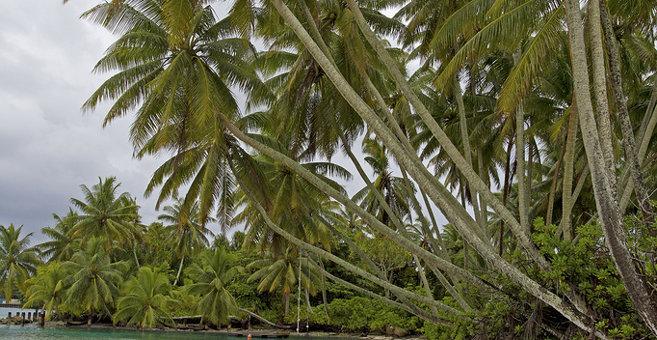 Tanekore - Palmiras atols
