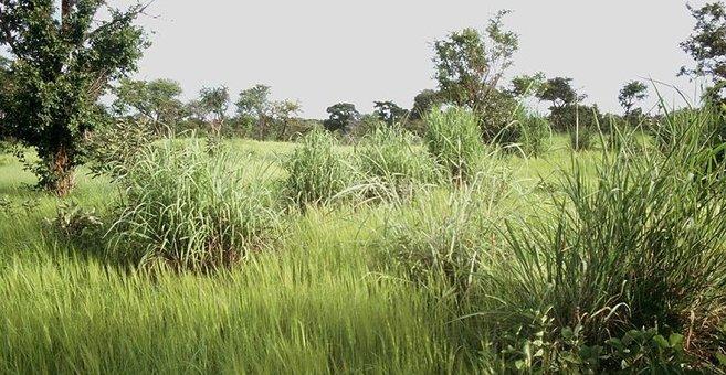 Panea - Pama Reserve