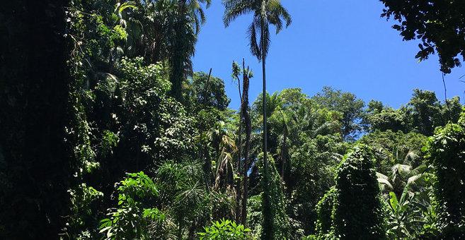 Victoria - Victoria Botanical Gardens