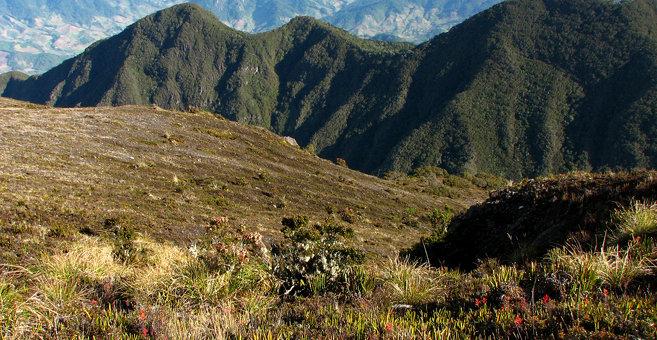 Aguacate - Volcán Barú