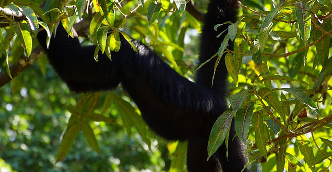 Paramaribo - Paramaribo Zoo