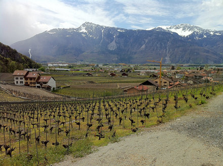 Looking south from Château d'Aigle, over the vineyards, Switzerland