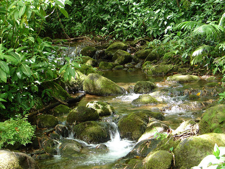 Stream, Akaka Falls State Park, Hawaii