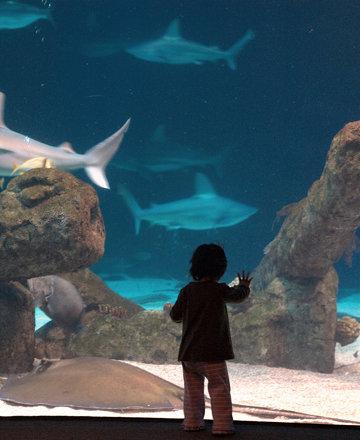 Mira ABQ Aquarium