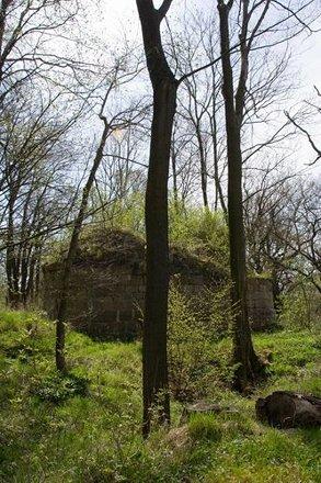 Ruine Burg Anhalt