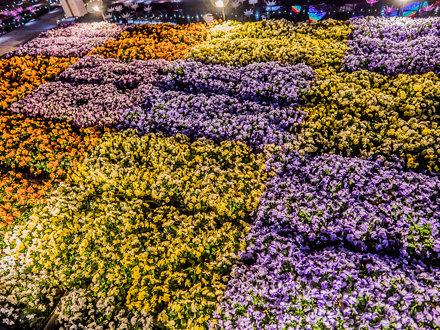 あしかがフラワーパーク : 光の花の庭